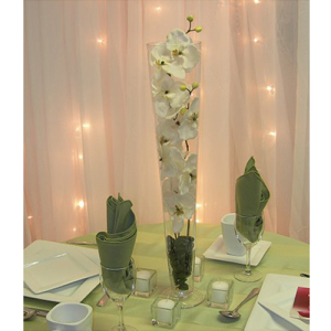 orchidspilsnervsae